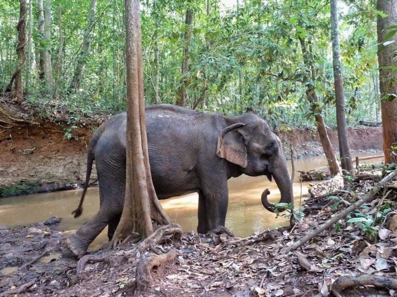 List Animal Friendly Elephant sanctuary Thailand